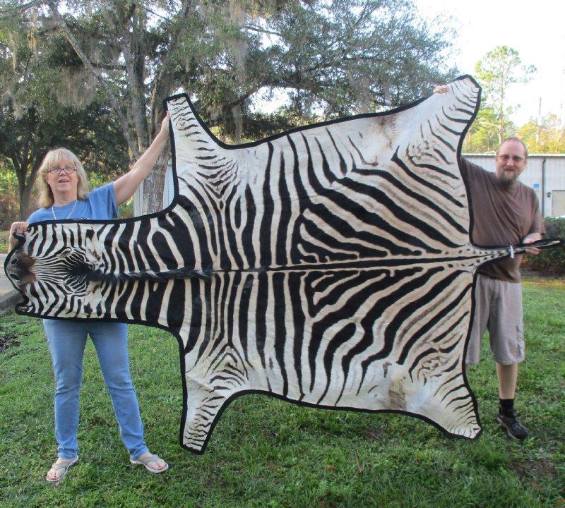 Real Zebra Skin Rug With Felt Backing