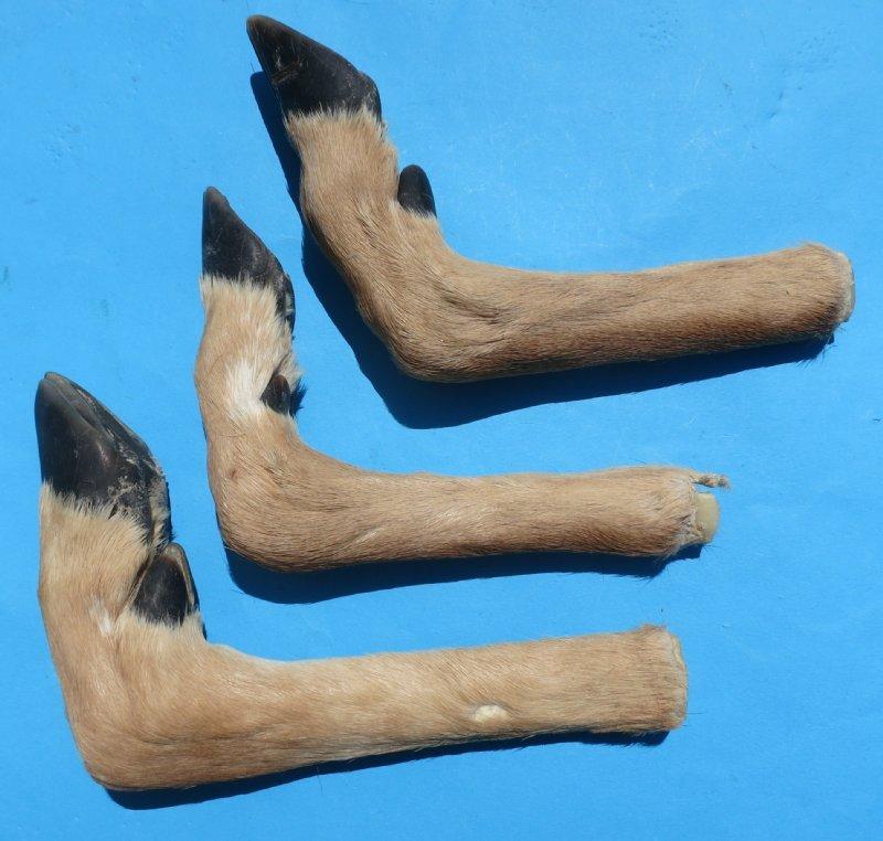Taxidermy Deer Feet for Sale