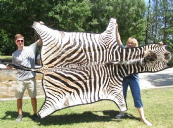100 Authentic Zebra Skin Rug For